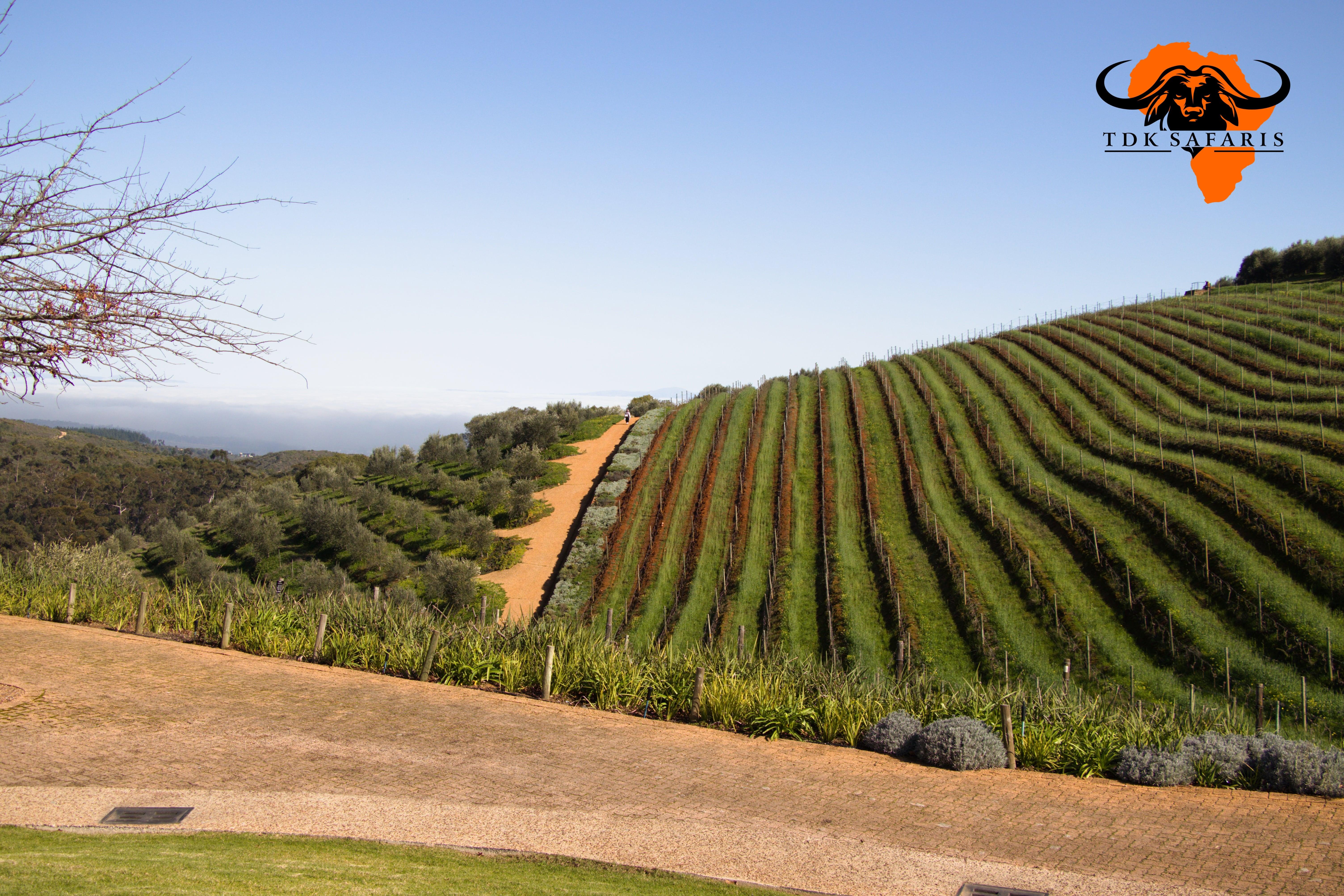 Cape Wineland custom tour